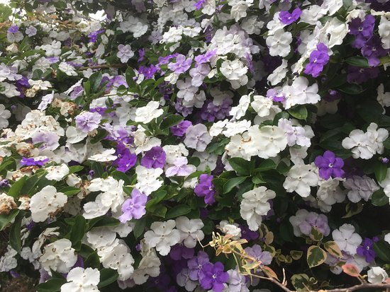 Cooroy Country Cottages: Typical blossoming plants on site