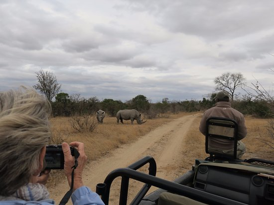 Ngala Private Game Reserve, Sør-Afrika: Amazed at how close we could get