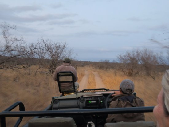 Ngala Private Game Reserve, Sydafrika: On the road - Wyseman out on front tracking