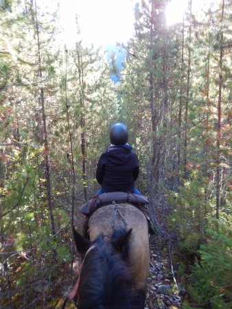 Pemberton, Canada: the pine trail
