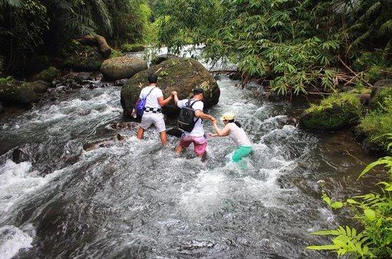 Balinese Authentic Nature Walking ...