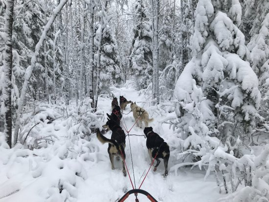 Ely, MN: Chilly Dogs Sled Dog Trips