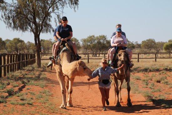 Camels Australia: Last minute run