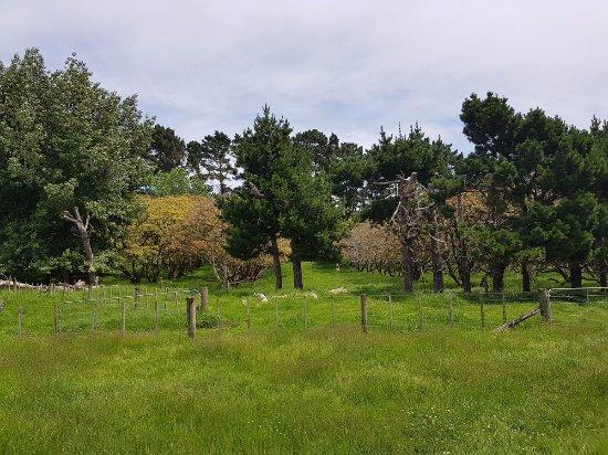 Ambury Park: Scenery