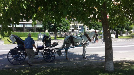 Hotel Bernerhof: 前面是一個大型公園中, 遠眺少女峯, 境色怡人,