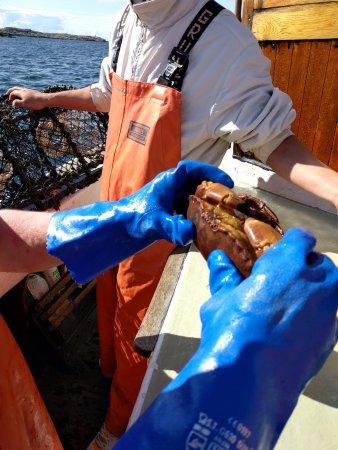 Hono, Suecia: En vacker horisont, en krabbtina, en amatörfiskare och en motsträvig krabba.