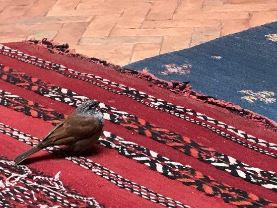 Riad Naya: photo0.jpg