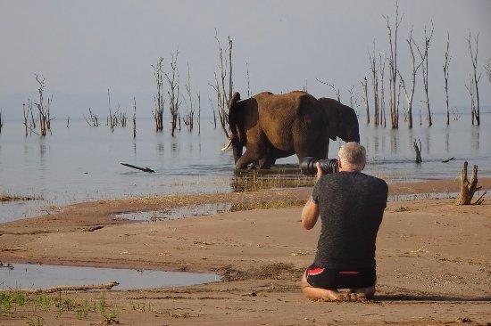Lake Kariba, Zimbabue: Amidst the elephants