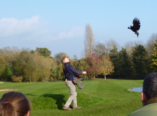 The International Centre for Birds of Prey: Flying display
