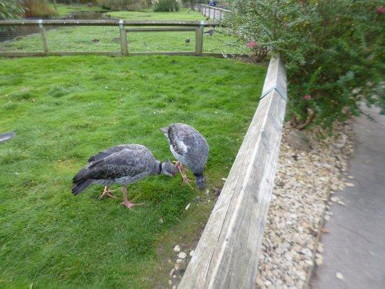 Slimbridge, UK: Some of the birds looked a bit odd