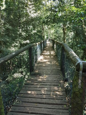 Dlinza Forest: 20171105_133842_large.jpg