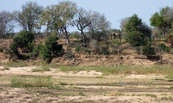 """Umkumbe Safari Lodge: uitzicht vanaf de veranda van """"LION""""......."""