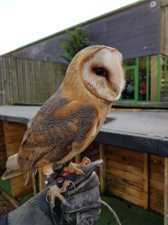 Willows Bird of Prey Centre