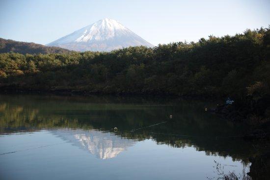 Aokigahara Forest: Fuji views