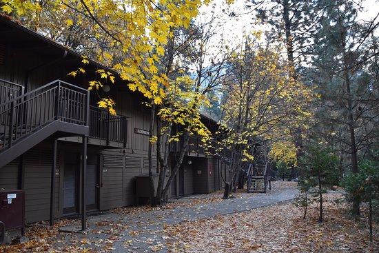 Yosemite Valley Lodge: Elderberry