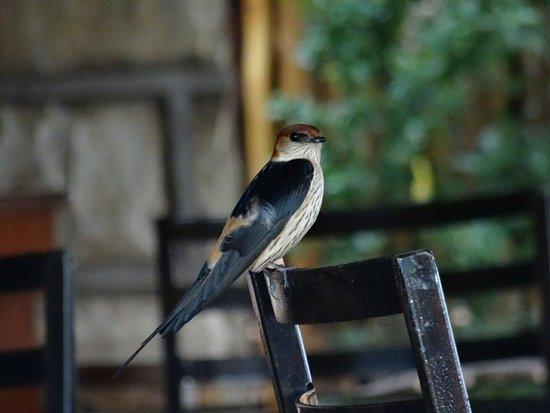 uKhahlamba-Drakensberg Park, Sydafrika: DSC07853_large.jpg