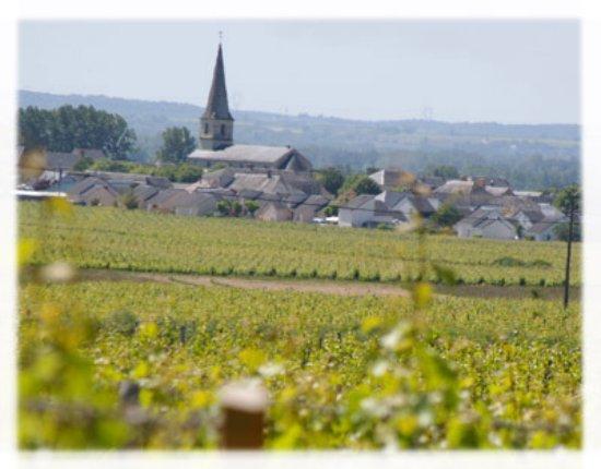 Saint Nicolas de Bourgueil, França: Vignobles