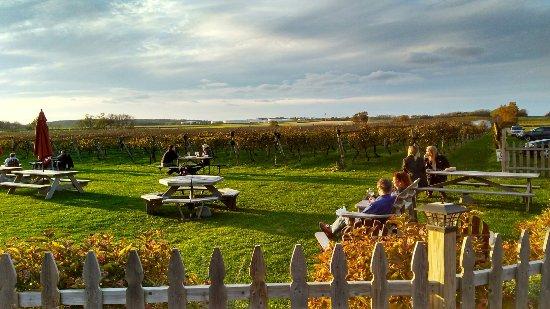 Aquebogue, Nova York: Beautiful location and amazing wines!