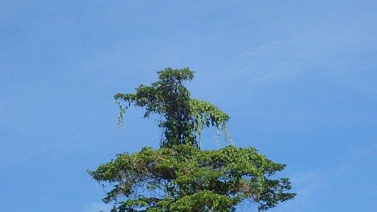 Sepilok Forest Edge Resort : Einfach wünderschön