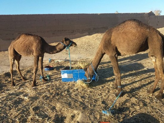 Morocco Berber Tours-Day Trips