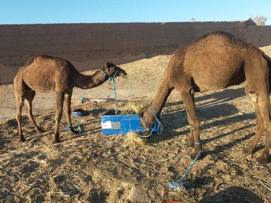 Morocco Trust Travel