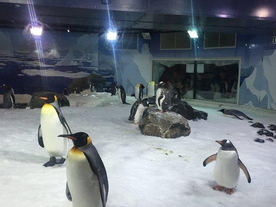 SEA LIFE Kelly Tarlton's: Hello penguins