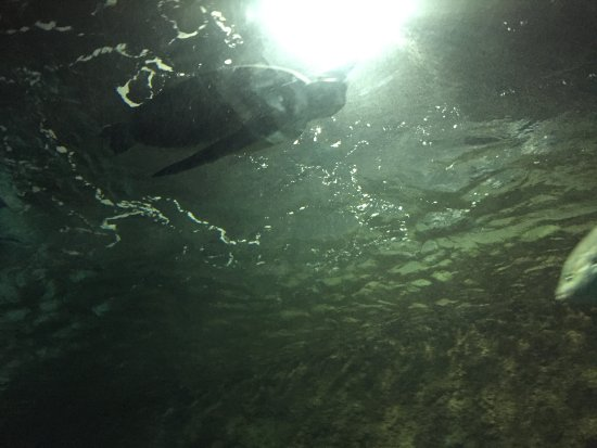 Sea Life Kelly Tarlton's Aquarium: Sea turtle