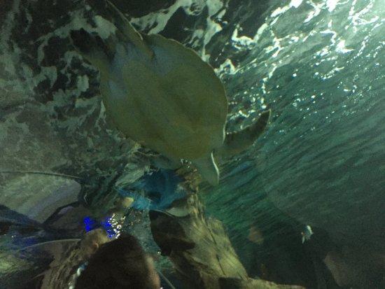 Sea Life Kelly Tarlton's Aquarium: Turtle
