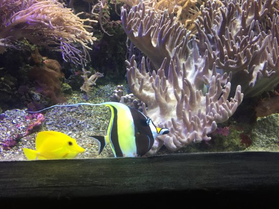 Sea Life Kelly Tarlton's Aquarium: Looking for Nemo!