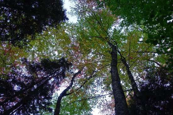 Moss Glen Falls: Beautiful walk to the falls