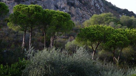 Hotel Il Pellicano: Gardens