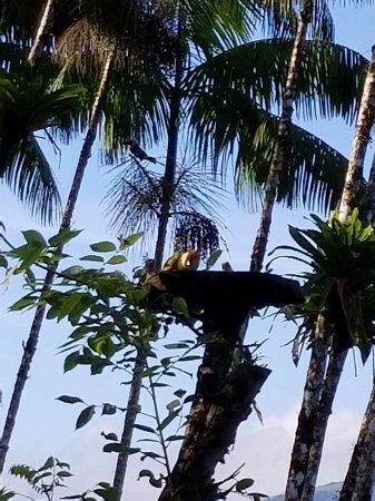 Nuevo Arenal, Kosta Rika: 20170822_072927_large.jpg