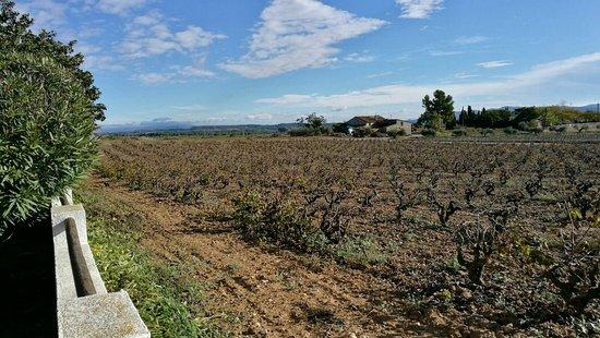 Vilobi del Penedes, Spanien: IMG-20171105-WA0015_large.jpg