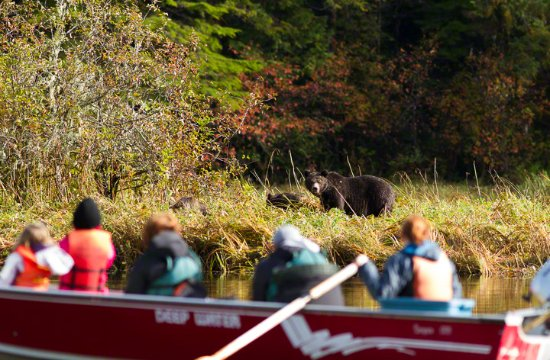 Great Bear Lodge: Watching a mother and her three cubs in October.
