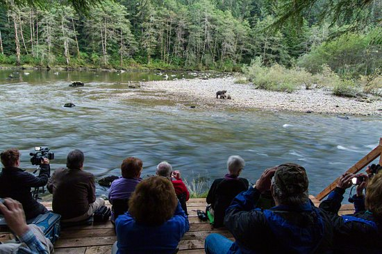 Great Bear Lodge: Watching bears eating salmon from one of our platforms.