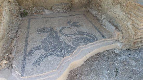 Aquinum Sito Archeologico: More mosaics