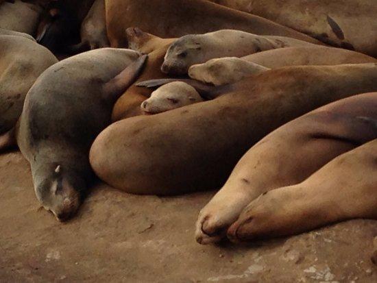 La Jolla Caves: Sea lions hauled out on rocks, near La Jolla sea caves