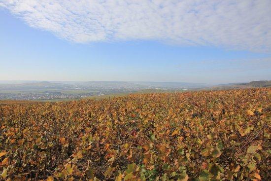 Mutigny, France: Magnifique vue panoramique sur Epernay et le vignoble champenois