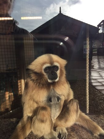 Monkey Haven: photo2.jpg