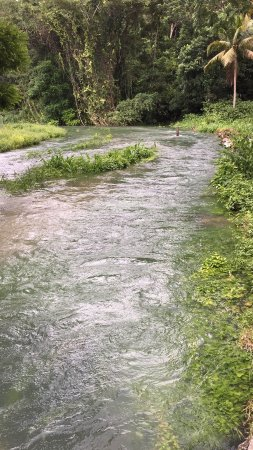 Petersfield, Jamaica: Roaring river