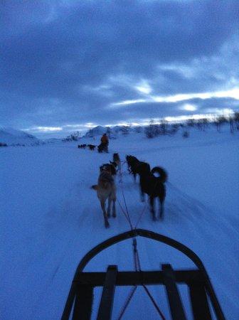 Troms, Noruega: Hundeschlitten