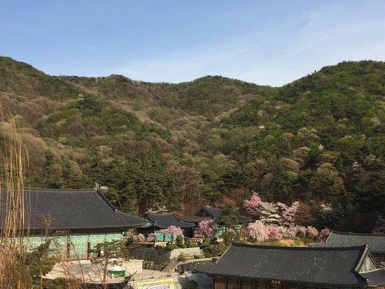 Cheonan, كوريا الجنوبية: photo1.jpg