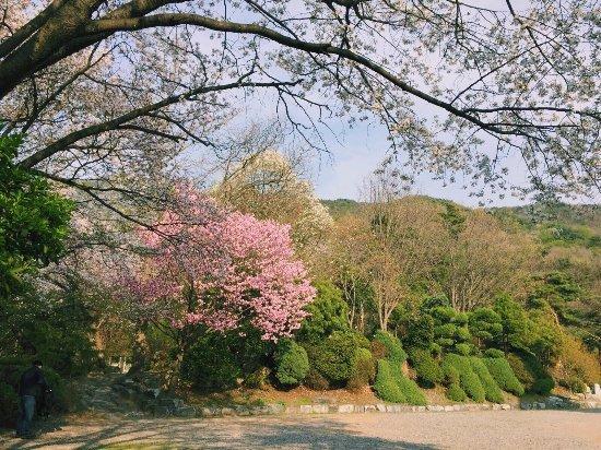 Cheonan, كوريا الجنوبية: photo2.jpg