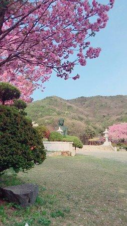 Cheonan, كوريا الجنوبية: photo3.jpg