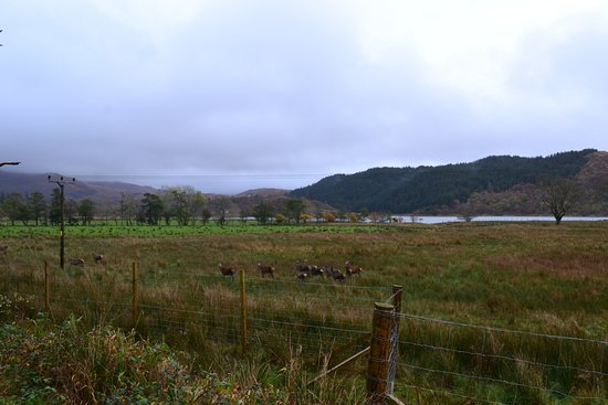 Loch Lomond and The Trossachs National Park, UK: Réserve Naturelle