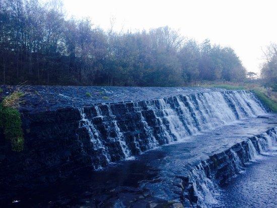 River Dodder: photo5.jpg