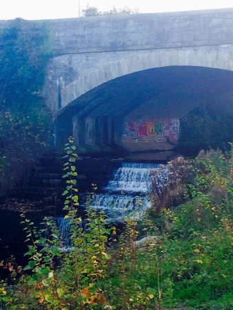 River Dodder: photo9.jpg