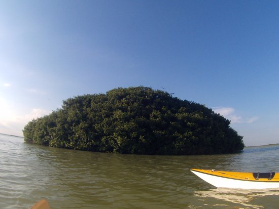 Yucatan Outdoors: hundreds of birds are hidden in this small mangrove island