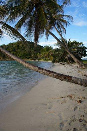 Mayreau: palmier mythique de la plage