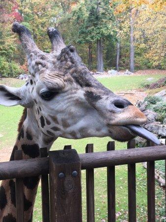 North Carolina Zoo : photo2.jpg